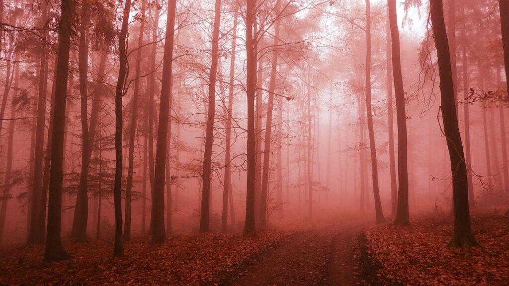 Trail Forest Fog Path Forest Road  - MAKY_OREL / Pixabay