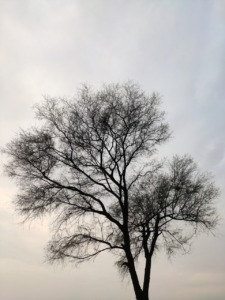 Tree Forest Darkness Dark Tree  - UdayBir / Pixabay