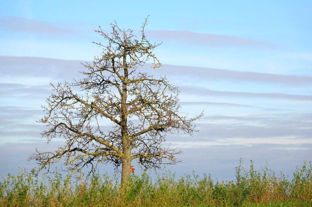 Tree Kahl The Last Leaf Nature  - Uschi_Du / Pixabay