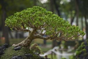 Tree Park Gardening Chinese  - TieuBaoTruong / Pixabay