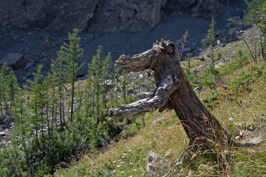 Tree Trunk Dead Tree Broken Tree  - Camera-man / Pixabay