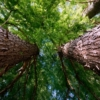Trees Trunks Branch Foliage Leaves  - icsilviu / Pixabay
