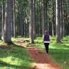 Trekking Forest Nature Environment  - MemoryCatcher / Pixabay