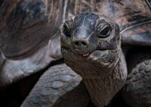 Turtle Reptile Tortoise Wildlife  - Ri_Ya / Pixabay