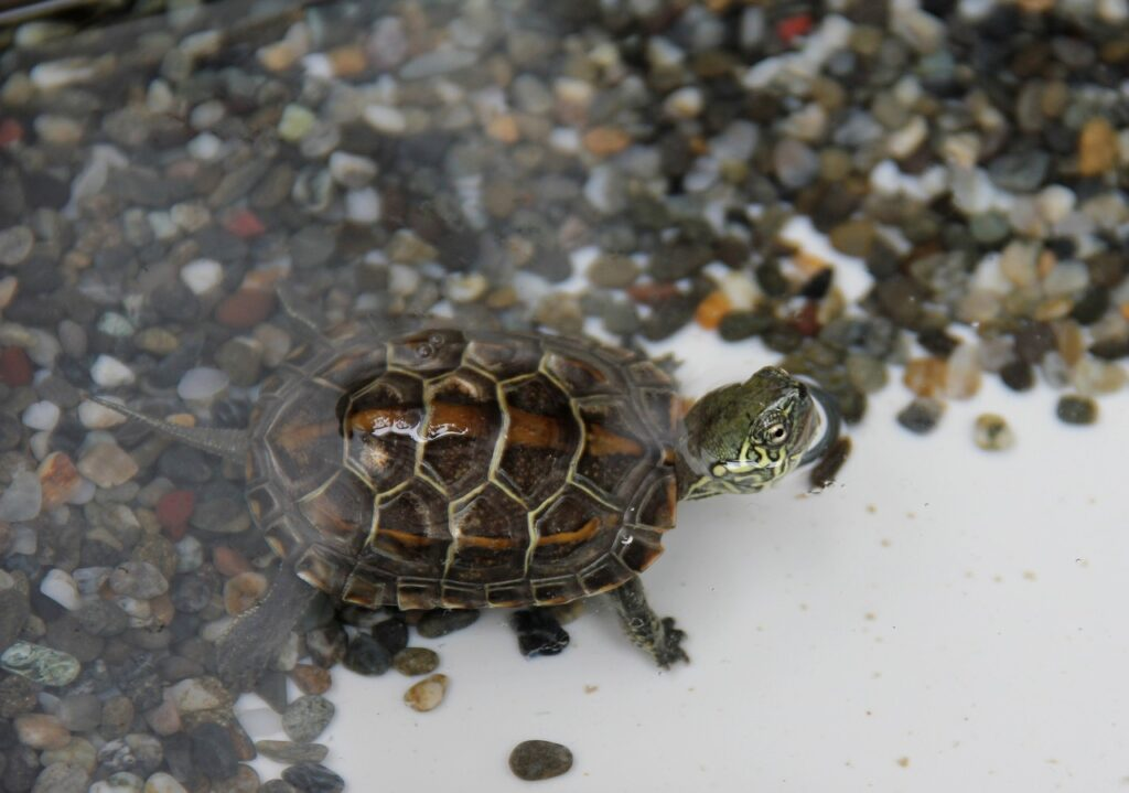 Turtle Turtles  - miiya / Pixabay