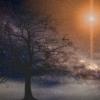 Universe Sun Tree Silhouette  - JuliusH / Pixabay