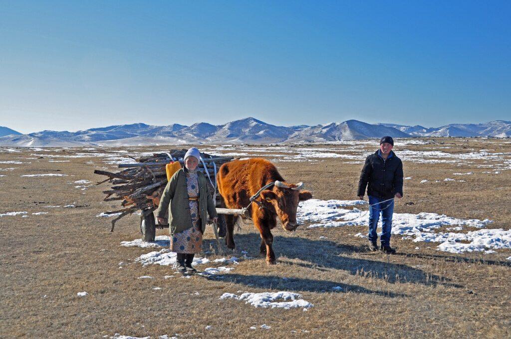 Wagon Wood Supply Nomads Mongolia  - francescobovolin / Pixabay