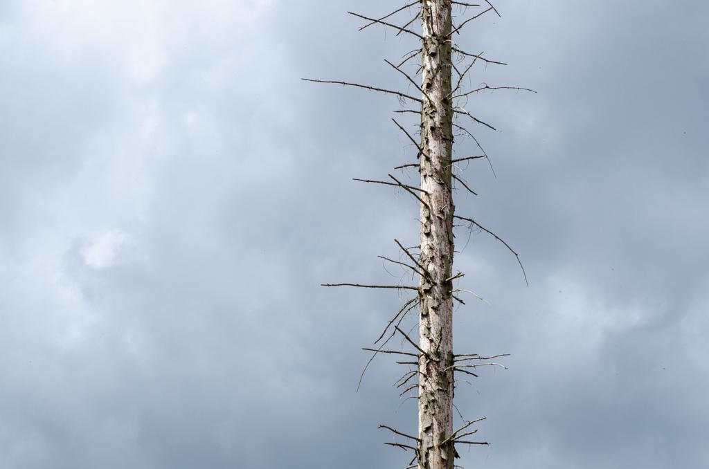 Waldsterben Drought Climate Change  - Kathas_Fotos / Pixabay