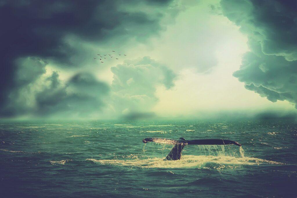 Whale Sea Waves Birds Sky Clouds  - enriquelopezgarre / Pixabay