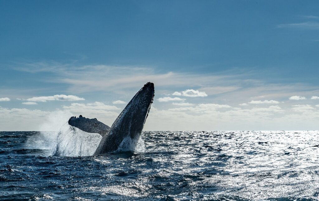 Whales Cabos Mexico Sea Cancun  - LuisCuriel / Pixabay