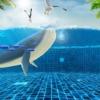 Whales Marines Underwater Gull  - AdelinaZw / Pixabay