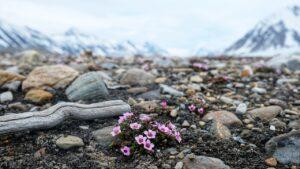 Wildflowers Ground Rocks Stones  - himuraseta / Pixabay