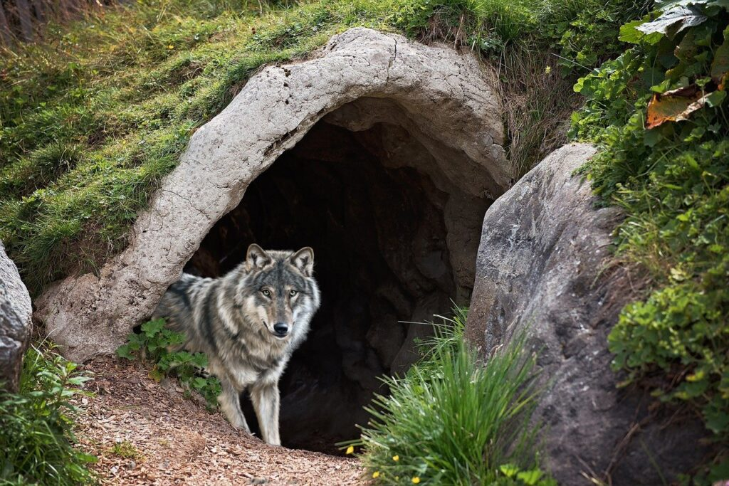 Wolf Cave Mystical Fantasy  - jcoope12 / Pixabay