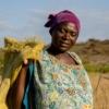 Woman Rice Field Farmer Africa  - Inno_Joseph / Pixabay