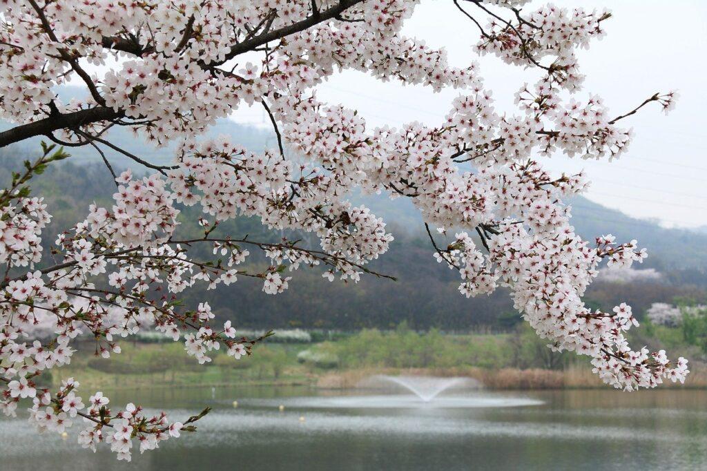 Wood Cherry Tree Quarter Season  - happymom33 / Pixabay