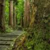 Wood Shrine Approach Cedar  - Kanenori / Pixabay