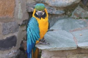Yellow Macaw Blue And Yellow Macaw  - manfredrichter / Pixabay